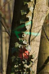 ckuchem-7329 (christine_kuchem) Tags: wald abholzung baum baumstmme bume einschlag fichten holzeinschlag holzwirtschaft waldwirtschaft