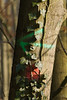 ckuchem-7329 (christine_kuchem) Tags: wald abholzung baum baumstämme bäume einschlag fichten holzeinschlag holzwirtschaft waldwirtschaft