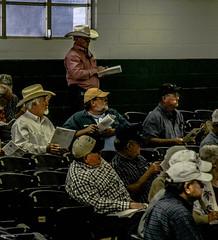 The cattle buyers (angelnfreefall) Tags: bulls sale auction ocalafl bullsale cattlebuyers cowboys cattlemen