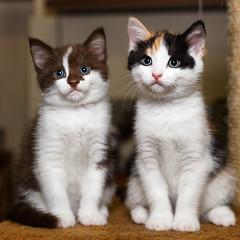 Sophie and Megan (socreative) Tags: kitty kitten cats family love beauty meow kittens