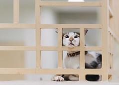 Stuck (drumbunkerdragon) Tags: cat feline stuck cute adorable derp domestic pet animal tiger bokeh nikon df 105mm f2 dc derpy singapore hdb letterbox area void deck