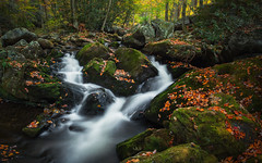 Rapid Autumn (Brian Truono Photography) Tags: greatsmokymountainsnationalpark lynncampprong nps nationalpark nationalparkservice smokymountains tennessee tremont autumn creek fall flow forest landscape leaf leaves longexposure motion mountains movement natural nature prong rapids river rock stone stream trees valley water waterfall wet woods