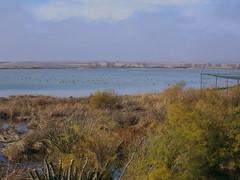 en la laguna (corbetapalentino) Tags: laguna de la nava