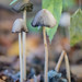 """2016_10_31_Champignons-9 • <a style=""""font-size:0.8em;"""" href=""""http://www.flickr.com/photos/100070713@N08/30657219936/"""" target=""""_blank"""">View on Flickr</a>"""