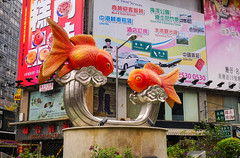 Fish statues at gold fish market (phuong.sg@gmail.com) Tags: animal aquarium aquatic asia asian attractive bag buyer cheap china chinese choice city color culture customer east ecology environment fair fresh freshwater gold goldfish guppy hobby individual loneliness look market orange passion people pet plastic sale sell serious shop stall store street swim tank trapped tropical young