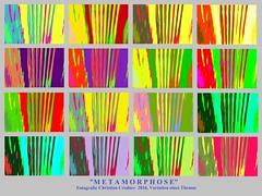 Metamorphose 16 x Variation eines Themas (Credi) Tags: abstrakt abstract abstractart abcfotos icmfotos metamorphose farbvariation abstractphotography abstraktefotografie