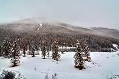 ART_8511m (MILESI FEDERICO) Tags: milesi montagna milesifederico italia italy piemonte piedmont alpi alpicozie altavallesusa altavaldisusa autunno fall federicomilesi nikon nikond7100 d7100 iamnikon automne visitpiedmont valsusa valdisusa valliolimpiche valledisusa nital 2016 novembre europa europe neve nevicata snow tokina tokina1116