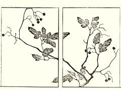 Lyreleaf nightsahde (Japanese Flower and Bird Art) Tags: flower lyreleaf nightshade solanum lyratum solanaceae soken yamaguchi maruyama shijo woodblock picture book japan japanese art readercollection