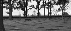 Langemarck German Cemetery, Belgium (surreyblonde) Tags: 19141918 greatwar ypres somme passchendaele langemark railywaywood battlefield trenches bombardment gas attack war belgium british canadian commonwealth german germany soldiers memorials rememberance ieper iepers flanders bw blackandwhite monochrome poppies remembrance inflandersfields ww1