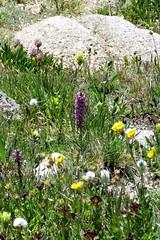Alpine Bouquet (Patricia Henschen) Tags: flower flowers wildflower wildflowers summitlake denver mountainparks mtevansscenicbyway mtevans scenicbyway mountains alpine colorado idahosprings park idahospringscolorado mountevans mountain