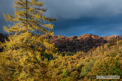 After the Autumn Storm (John Fn Photography) Tags: 70200 70200mmf28 autumn britain cumbria d810 europe england fall greatbritain lakedistrict manfrottotripod nikkor nikon nikon70200mm nikonfx orange seasons tarnhows trees uk unitedkingdom alps cloud crag darksky elevation foothills hill landscape mountain outdoor peak range ridge storm southlakelanddistrict gb