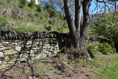 Dry rock retaining wall, Arrowtown Cemetery, New Zealand (contemplari1940) Tags: newzealand arrowtown dryrockwall retainingwall cemetery