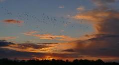 Sunset (jehazet) Tags: zonsondergang sunset wolkenlucht clouds