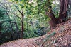 Yoga in the park (sirio174 (anche su Lomography)) Tags: yoga yogaessenziale giochi letture serre villasucota villaolmo chilometrodellaconoscenza autunno autumn como