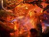 Bonfire Night (milfodd) Tags: november 2016 november5th bonfire fire embers orange colour