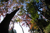 Going to Crimson (nak.viognier) Tags: crimson ryokuchipark osaka 緑地公園 紅葉 olympusepl3 lumixgfisheye8mmf35