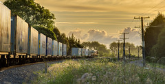 Day-end (zebedee1971) Tags: landscape train railway rail tracks kiwirail sunlight sunset light grass flowers wild wires sky clouds trees sun power poles dusk weeds weed green leaves leaf road lane container ship shipping metal ballast