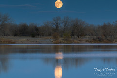 The moon reflects on a pond as it rises