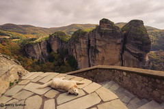 #86 - Four Legged Friend (Keeperofthezoo) Tags: 116picturesin2016 dog fourleggedfriend greece meteora beauty canine formation landscape outdoors rock scenery steps tourism travel