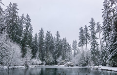 First Snowfall of the Season (Don White (Burnaby)) Tags: centralpark upperpond sigma19mmf28 snow pond