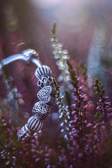 My Flowers (Beata Jakubas) Tags: beatajakubas flower beyondbokeh bokeh pandora paintingwithlight light