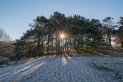 Shine (Esther5h (On and Off)) Tags: donoppedijk sun sunrise shine ice cold icy kou koud zon zonneschijn bomen trees raysoflight sunrays outdoor landscape landschap amsterdamsewaterleidingduinen awd nederland duinen ster star