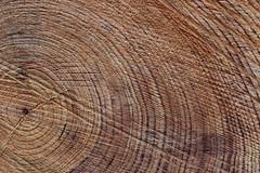 rbol de la vida. (AlmaW8) Tags: rbol tree anillos rings autumn otoo parque park madrid spain capricho texture textura foto fotografa photo photography picture canon canon1200 macro