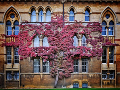 Ivy League (Douguerreotype) Tags: gb uk britain british england oxford buildings architecture university christchurch college windows stone ivy red