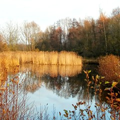 Pont in a biosphere preserve late November (mobilepic) (eikeblogg) Tags: natureshots landscape autumn biosphere preserve reed flora reflection pont mobilephotography