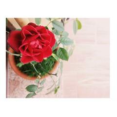 Nature. (*Valentina.) Tags: nature wild rose rosa flora plant red details dettagli december