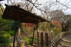 20161204-DS7_6516.jpg (d3_plus) Tags:  a05 wideangle d700 thesedays  architecturalstructure   kanagawapref   sky park autumnfoliage  japan   autumn superwideangle dailyphoto nikon tamronspaf1735mmf284dild  street daily  architectural  fall tamronspaf1735mmf284dildaspherical touring streetphoto  nikond700 tamronspaf1735mmf284 scenery building nature   tamron1735   tamronspaf1735mmf284dildasphericalif   autumnleaves
