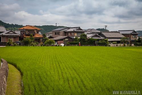 Zielone pola ryżowe na przedmieściach