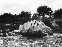 black and white (nosha) Tags: beauty