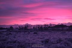 Sunrise (David_West Photography) Tags: england sunrise landscape glow outdoor sony frosty newforest moning southernengland morningsunrise newforestnationalpark