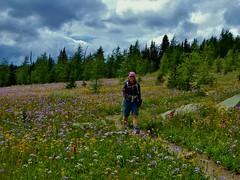 7-102 (Gnarlene) Tags: flower hiking banff healypass monarchramparts