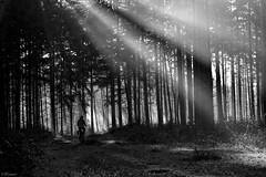 The magical light . (Wouter van Wijngaarden) Tags: blackandwhite white black netherlands monochrome dutch canon blackwhite flickr outdoor nederland sunbeam ef50mmf18ii wout sunray fiets baarn bossen provincieutrecht woutervanwijngaarden explorewinnersoftheworld