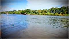 DSC_1706 (|| Nellickal Palliyodam ||) Tags: india race boat snake kerala krishna aranmula avittam parthasarathy vallamkali palliyodam malakkara nellickal jalothsavam