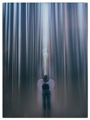 Light Beam Experiments (mezuni) Tags: light angel forest beams