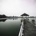 At Lower Peirce Reservoir, Singapore