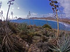 Bosque de pitas suelo (AAcero) Tags: almeria cabodegata genoveses