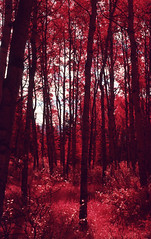img016 (Photo Taker #9) Tags: infrared orangefilter colorinfraredfilm aerochrome