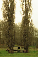 Two Horse Town (Cruseon) Tags: old trees horse house
