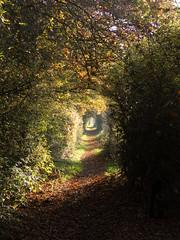 Barnet Gate Wood