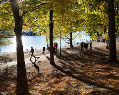 Nobelparken (gerikson) Tags: trees people dog reflection fall water leaves shadows pedestrians djurgrden nobelparken cv40 cosinavoigtlnderultron40mmf2