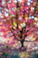 Rosenberg-Ana_-1-274 (Ana~Rosenberg) Tags: tree lensbaby bokeh fujifilm xt1 seeinanewway edge50 fujifilmxt1 fujixt1 composerproii