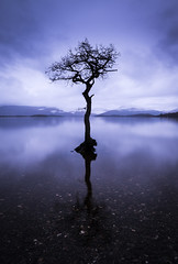The Milarrochy Tree Loch Lomond - 2 (DrJekyll UK) Tags: reflection reflections scotland reflective loch lochlomond scottishhighlands reflectedsky hardytree scottishcoast scottishhills milarrochybay milarrochy nikond810 milarrochytree scottishtourism