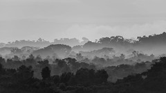 Connor McNeill_layers of the jungle (feelagainecuador) Tags: slr digital photography photo nikon photograph dslr d800 thefella conormacneill thefellaphotography
