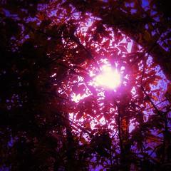 Lodestar (eterem) Tags: trees light sun leaves sunshine square artistic outdoor fineart guide lodestar