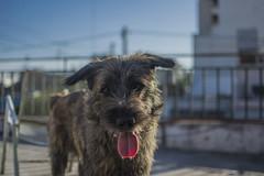 (MaximF.) Tags: dog animal nelson perro mascota