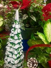 A Holly Jolly Christmas (EDWW day_dae (esteemedhelga)) Tags: santa christmas xmas holiday snow stockings st bells festive reindeer snowflakes snowman globe poinsettia illuminations garland holly scrooge nicholas elf wreath evergreen ornaments angels tinsel icicle manger yule santaclaus mistletoe nutcracker cheer jolly christmastrees happyholidays bethlehem merrychristmas bauble rejoice goodwill partridge elves yuletide caroling holidayseason carolers seasongreetings merrifieldgardencenter edww christchild daydae esteemedhelga jesus hohoho gingerbread wrappingpaper giftgiving joyeuxnoel northpole holidaydecornativity sleighride artificialtree candycane feliznavidadfrostythesnowman kriskringle sleighbells stockingstuffer wisemen twelvedaysofchristmas winterwonderland